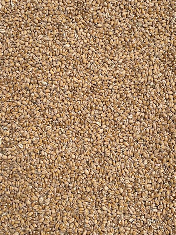 tarwe - lavett